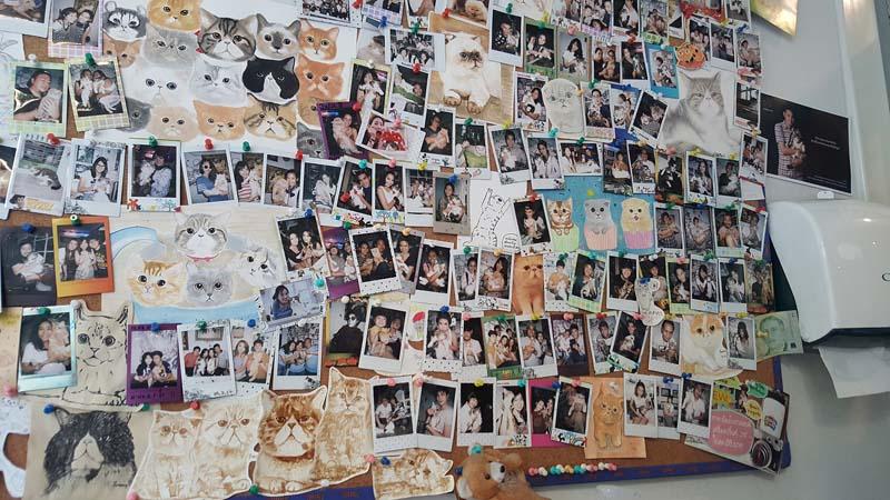 พาไปคาเฟ่แมวชิคชิค Caturday cat cafe