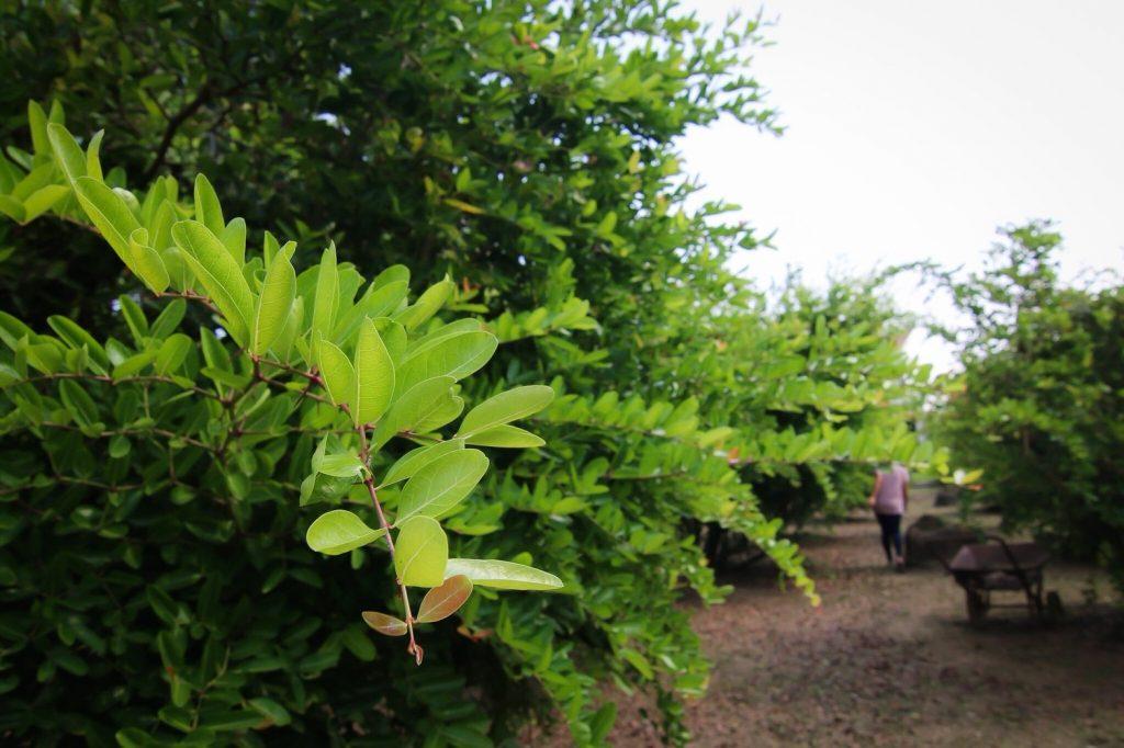 ที่เที่ยวอัมพวา สวนมะม่วงหาวมะนาวโห่